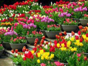 Цветя за градината