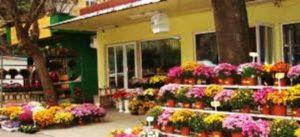Как да изберем цветя от магазин