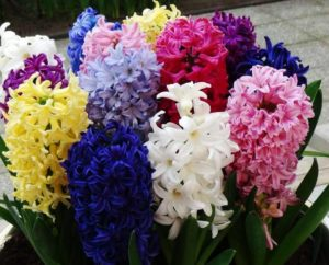 Символика на цветята
